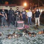 Tak Takut Corona, 35 Orang Ditangkap Saat Judi Sabung Ayam